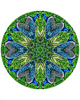 Peacock Kaleidoscope